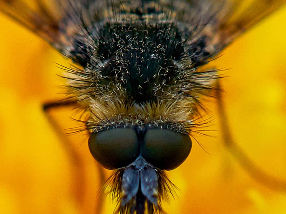 The Best Close-Up Photography 2020