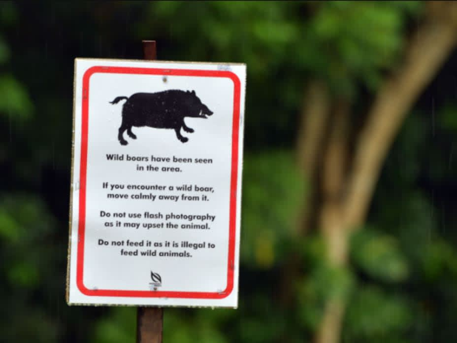 Feeding wildlife in Singapore a 'lose-lose situation'