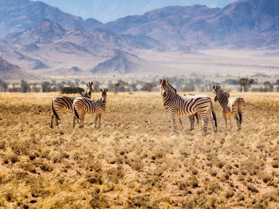 Choosing Your Perfect Safari