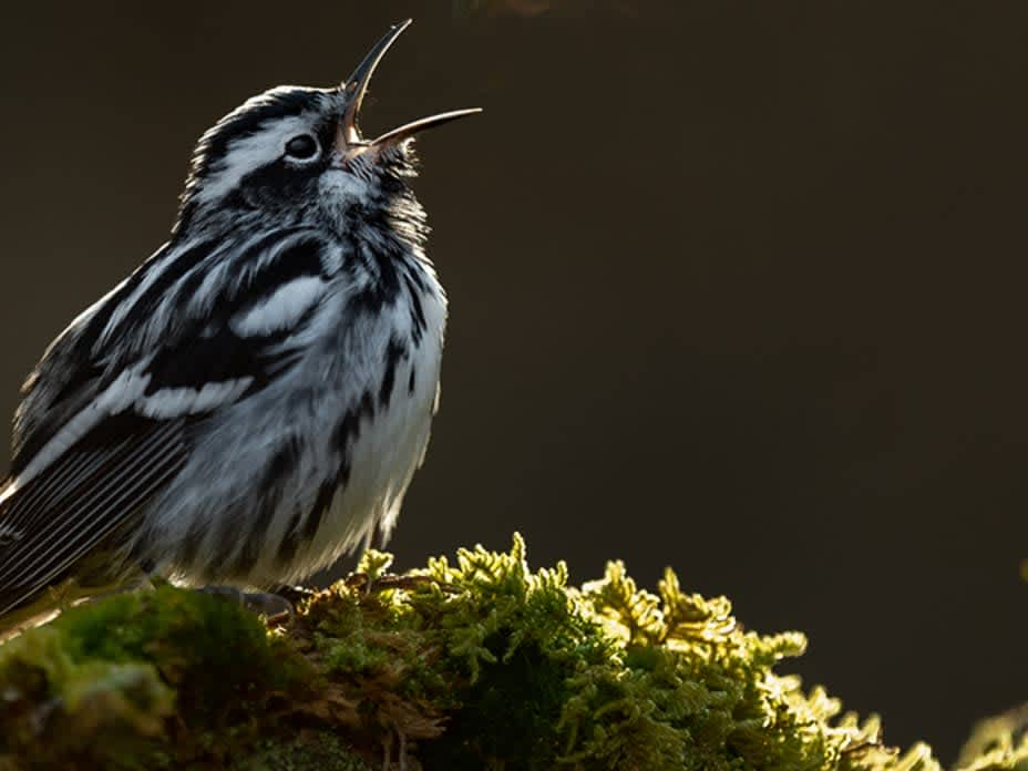 Bird Photographer of the Year Finalists 2021
