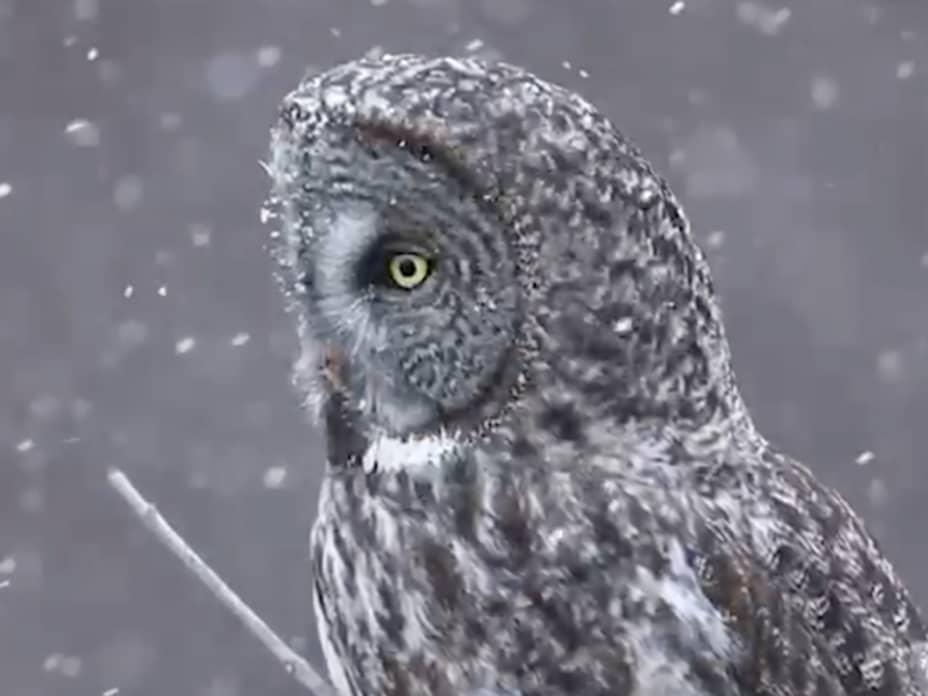 Amazing Bird Images from the 2021 Audubon Photography Awards
