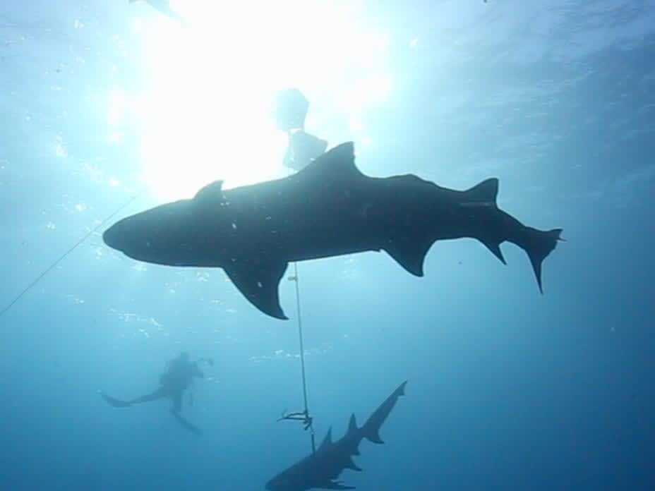 The World's Best Dive Sites for Shark Lovers
