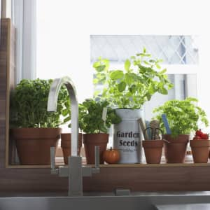 Edible plants you can grow indoors