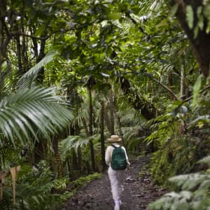 Puerto Rico's 7 best hiking trails